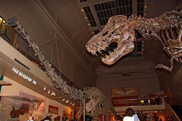 Сканирование экспозиции с динозаврами