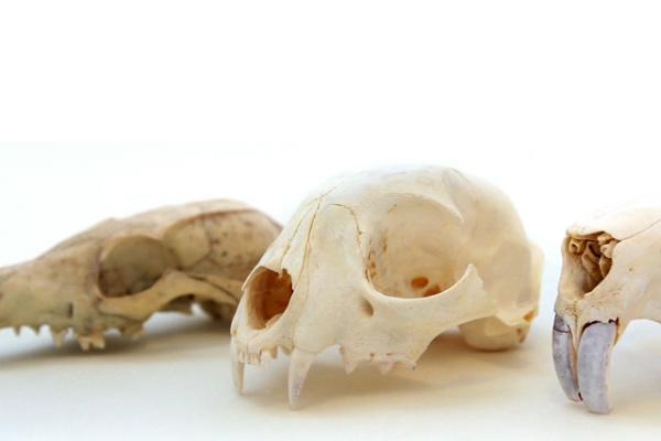 3d сканирование и черепа из драг. металлов