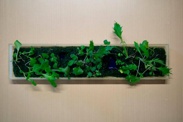 Технология 3d печати живых садов