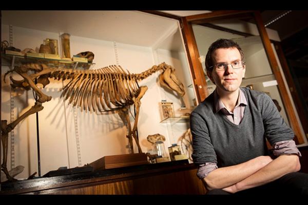 Восстановление скелета Квагги