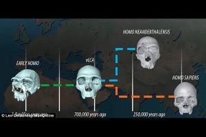 3d сканирование черепов