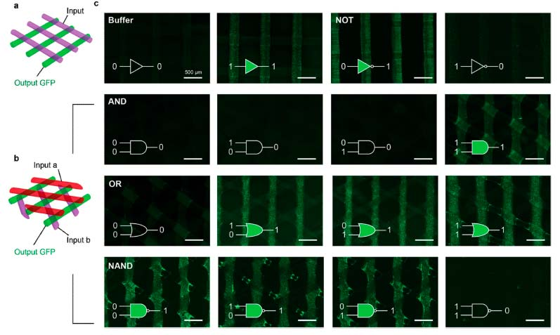 Схема биочернил