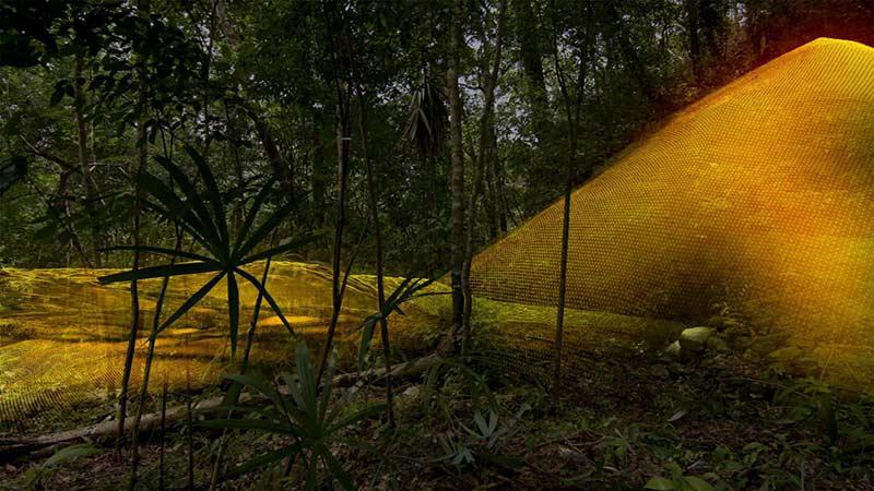 Джунгли Гватемалы