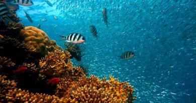 3d печать может спасти коралловые рифы