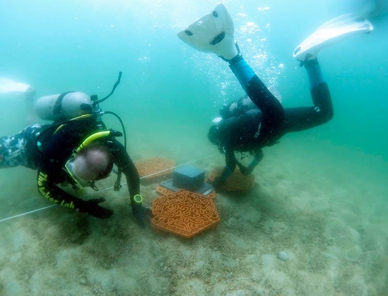 Установка коралловых плиток
