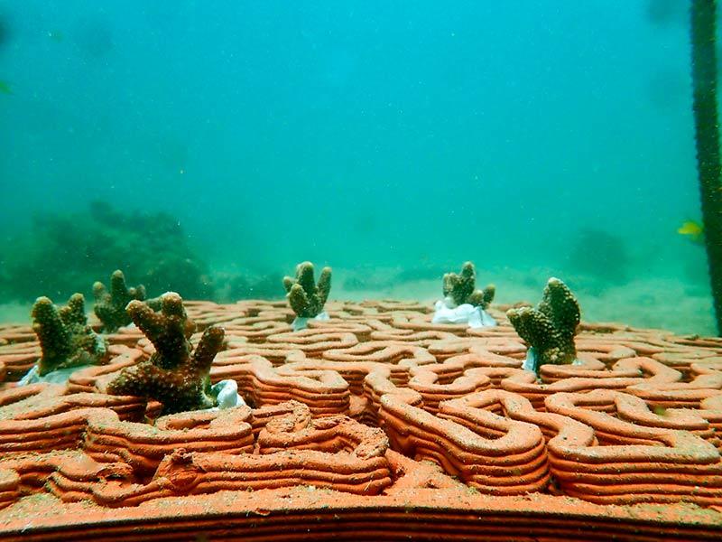Рост кораллов